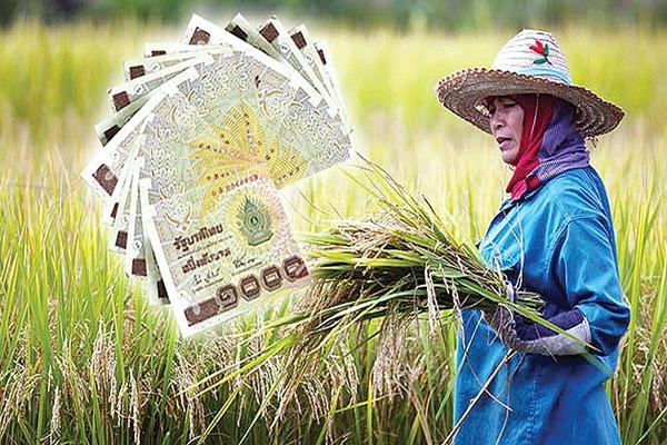 ราคาข้าวหอมมะลิพุ่ง 48.29% หวั่นปลอมปน-เตือนชาวนาระวังโดนมิจฉาชีพหลอก