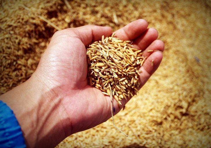 ค้าภายในเผยข้าวหอมมะลิเกรดเอราคา18,000บาทต่อตัน สูงเป็นประวัติการณ์ แนะชาวนาทยอยขายเพื่อไม่ให้กดราคาข้าว