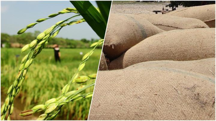 ไทย จับมือสมาชิก WTO กดดันอินเดีย ยกเลิกมาตรการอุดหนุนส่งออกข้าว