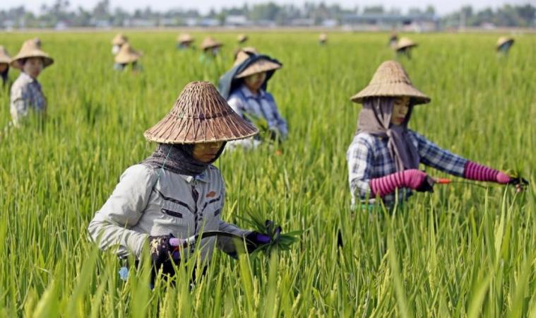 """""""พาณิชย์""""จับมือสมาคมผู้ส่งออกข้าวไทย ถกเวียดนามร่วมมือยกระดับการค้าข้าวสองประเทศ"""